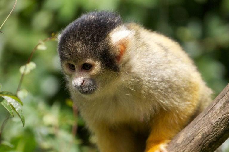 Apenheul – meer dan alleen aapjes kijken?
