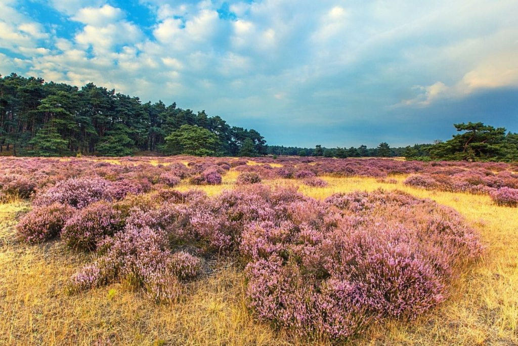 Nationaal Park de Hoge Veluwe: wat kan je er zien en doen?