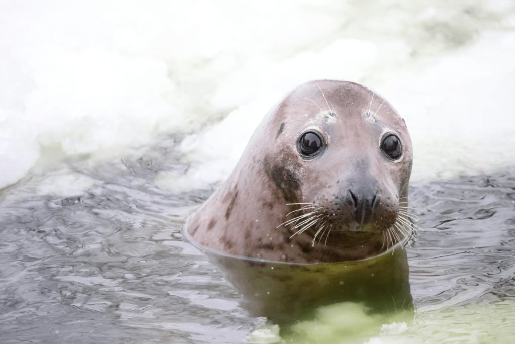 AquaZoo Leeuwarden: bezienswaardigheden en korting