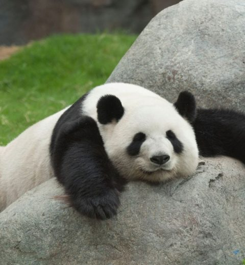 ZooParc Overloon: dieren, tickets en korting