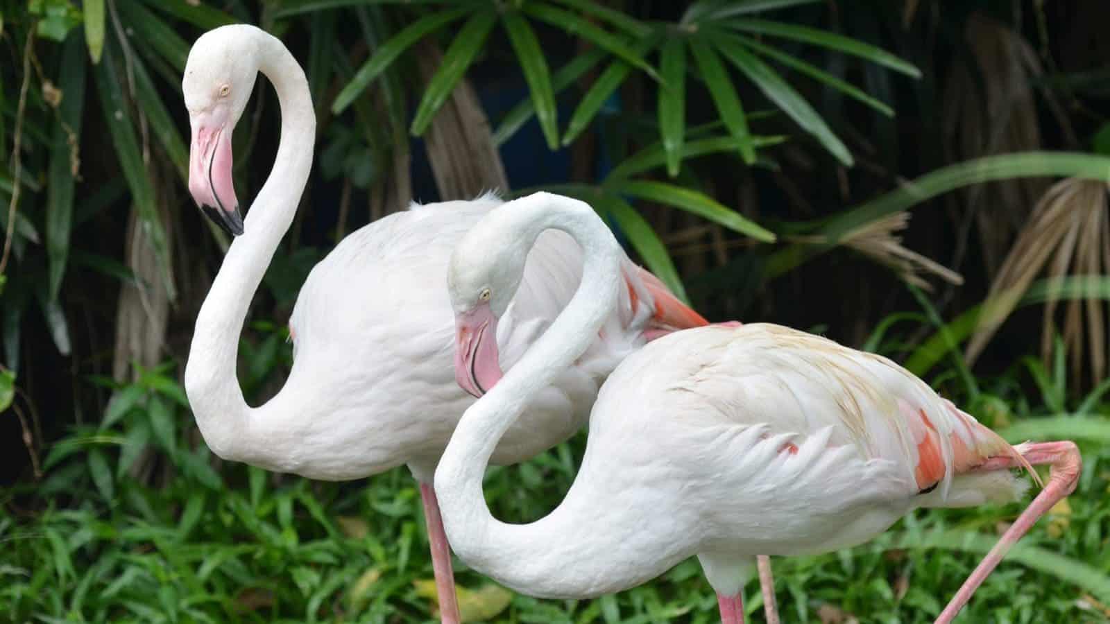 Vogelkelder