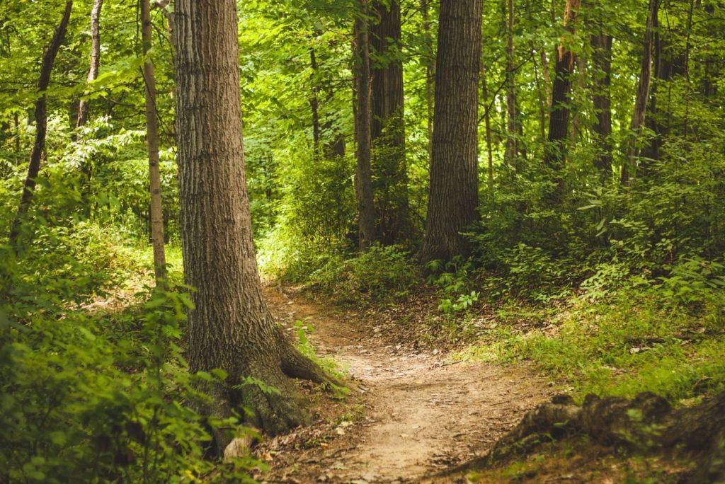 Leukste bossen en natuurgebieden voor een dagje weg