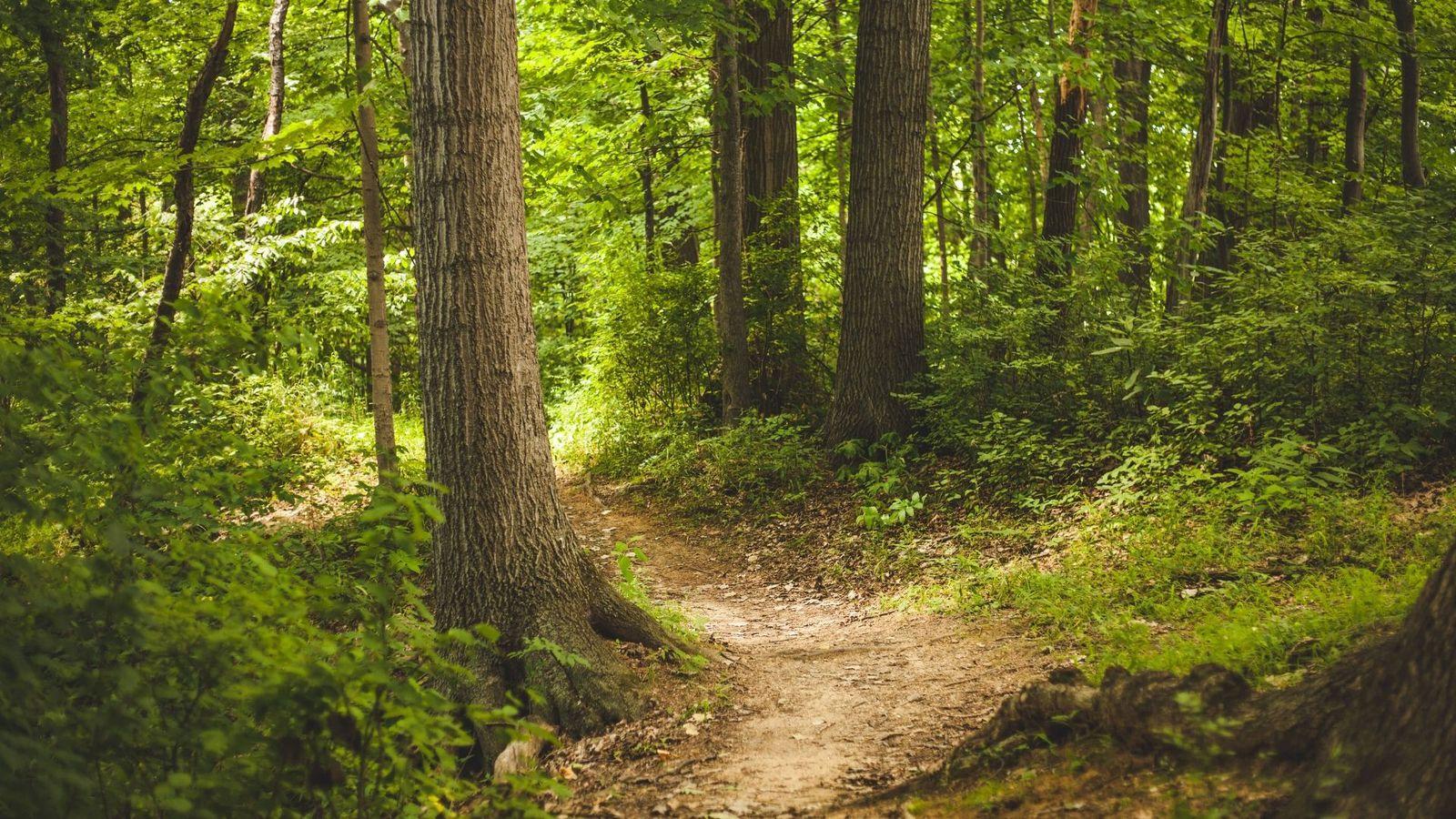 Bossen-natuurgebieden-dagje-weg